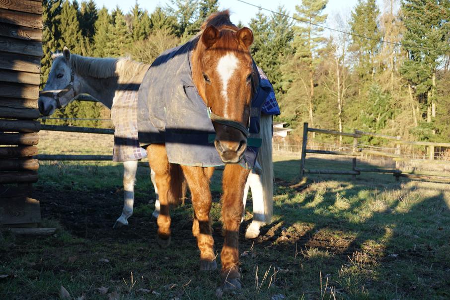 Pferd eindecken? Fragen Sie es doch